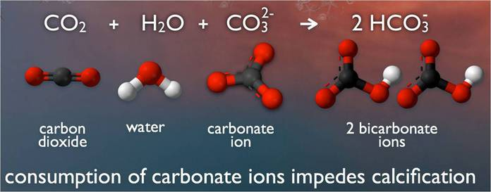CO2 causes ocean acidification